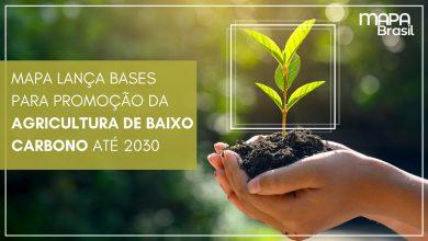 Foto de Baixo Carbono Plano ABC+: Integração lavoura e pecuária são soluções sustentáveis para produção no campo