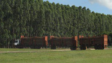 Foto de Cresce em 17% exportações de Mato Grosso do Sul; 1,8 bi de superávit. Três Lagoas segue em destaque