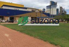 Foto de Suzano disponibiliza portal para pré-cadastro de fornecedores do Projeto Cerrado