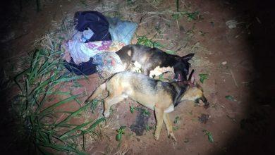Foto de PMA de MS autua auxiliar de serviços gerais em R$ 6 mil por matar dois cães a pauladas