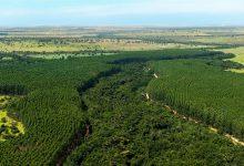 Foto de Eldorado Brasil divulga Relatório de Sustentabilidade 2020